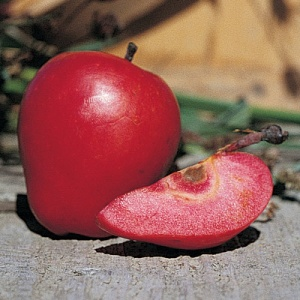 Red Flesh Apple