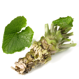 Wasabi Growing Guide