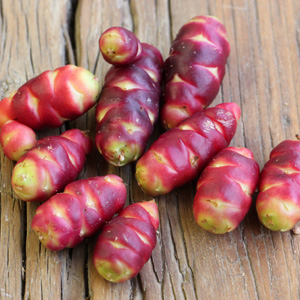 Andean Tubers